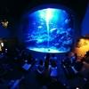 東京スカイツリーにある「すみだ水族館」にてiPhone 7での動画撮影+THETAでの360度撮影 #水族館 #theta360 #iphone