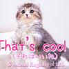 【週末英語 #126】英語であいづちを打つ「That's cool !(それはいいね)」