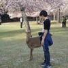 次男と関西旅行2日目~海遊館、奈良公園、東寺