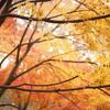 週末風景・県立 四季の森公園