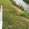河川敷の草刈り。