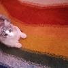 あなたの自己治癒力によりそう 虹のじゅうたん 7種類のレメディーの ハーモニー【あらえびすおすすめ】