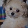 愛犬が停留睾丸だったので、生後半年で去勢手術をしました