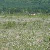 奥日光戦場ヶ原の可憐な花たちを撮る