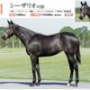 【キャロットクラブ2021募集馬】尺・歩様・動きを評価!(1)▶︎(16)【第二のサートゥルナーリアに出資したい…】