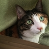 【愛猫日記】毎日アンヌさん#42