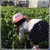 赤塚農業まつり☘️☘️