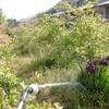 ブルーベリーの水遣り、満開の花たち、ジャガイモの植え付け
