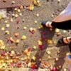 晴天、紅葉、手作りブラウニー。