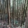 林業ツアー in 東吉野町&川上村