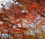 ユーシン渓谷の「ユーシンブルー」と丹沢湖の紅葉に癒されて!
