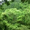 【2014】伊豆旅行記② テルマエロマエのロケ地!天城荘に泊まる【宿泊】