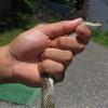 山奥ニート、蛇を食べる