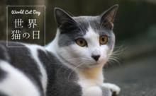 8月8日は世界猫の日 World Cat Day!