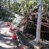 【台風15号の爪痕】千葉県船橋市の公園の風景 災害の備えを見直すポイント!