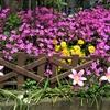 五月 日々徒然 庭の花 2