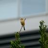 野鳥撮影時のシャッタースピードの目安
