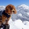 マルプーモカ3月の八ヶ岳の雪山に登る|がんばるも試練の登山に…