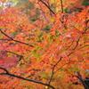 【奥秩父】妙法ヶ岳 渓流・紅葉・狼信仰、秋色の三峰