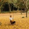 【キャンピングガーデン家和楽】紅葉の絨毯・木のブランコ・久慈川