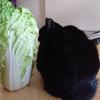 今日の黒猫モモ&白黒猫ナナのー844