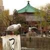 上野不忍池