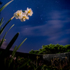 「花と星を撮りたい」パンフォーカス星景への道のり