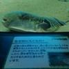 【紹介】下関市立しものせき水族館 海響館 に行きました!