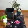 バラの無農薬栽培を始めてみませんか…初心者向け少人数教室のお知らせ