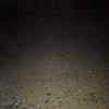 【冬の大潮・真夜中の干潮】マイナス潮位になるから海に行ってみた