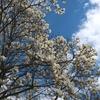 春の散歩🌸