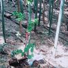 「2018年のタケノコ」 (2) 面白い木を庭に移植しようと思って、山に行ったら8本掘ってきた。11+8=19  庭いじりの贅沢 「湧清水」の紫外線ランプ