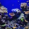 2016シンガポール旅行記8 セントーサ島の水族館