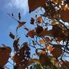 秋のレース模様