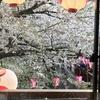 今年もバラ栽培のためのボカシ肥料作りをはじめました。