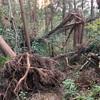 11月9日 鎌倉絶景ナイトトレイル中止と鎌倉チャリティラン開催のお知らせ