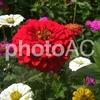 樹木医師の乾燥に強い人気の花