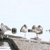 今朝の瓢湖&福島潟
