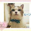 猫ちゃんのお写真紹介.第8弾