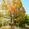 豊橋公園の4月~すこやか、でまたお会いできたらいいですね!
