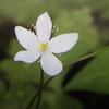 4月4日花と花言葉・歌句