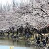 鶴ヶ島運動公園で桜を撮ってきた!