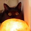 今日の黒猫モモ&白黒猫ナナの動画ー781