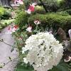 今朝もお花好きなお隣さんから素敵な花束を頂いて💐