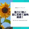 初心者におすすめな鉢植えガーデニング!夏に花が咲く植物5選