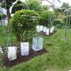 菜園だより`21 ④ 苗の植え付け