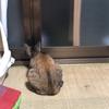 ⑦のら猫えんちゃんばんちゃん日記