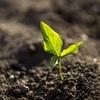 新規就農者が就農に必要なものトップ3