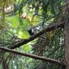 ジィちゃんと探鳥、表丹沢県民の森で冬鳥を探すが…/2020-11-12