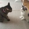 子猫下痢対策